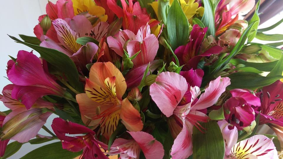 fiori_per_corteggiare