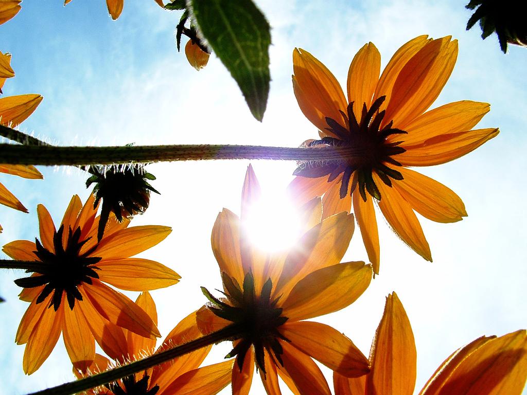 fiori-online