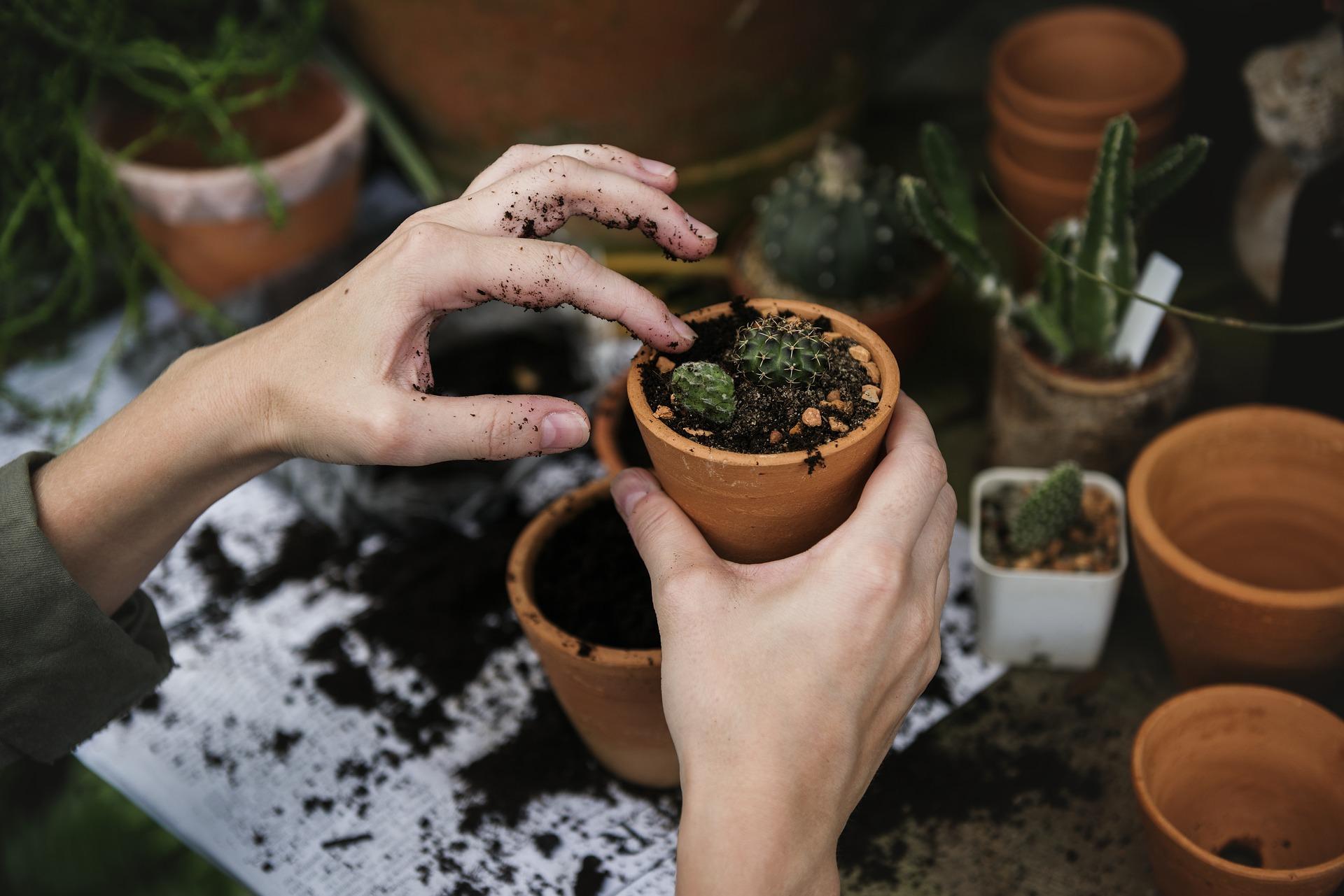 Copia di come appassionarsi al giardinaggio